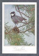 Chromo MENU CACAO SUCHARD, Oiseau, Chocolat Suchard, Grand Format Env. 20.5 X 14 Cm - Suchard
