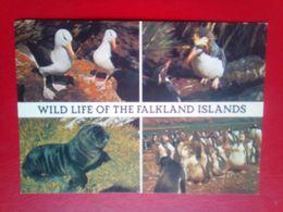 Wildlife Of The Falkland Islands - Falkland