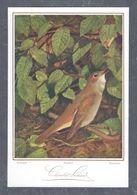 Chromo MENU CACAO SUCHARD, Oiseau, Nachtigall, Rossignol, Rosignuolo, Chocolat Suchard, Grand Format Env. 20.5 X 14 Cm - Suchard