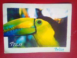 Toucan - Belize