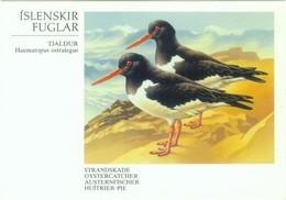 Austernfischer - Vögel