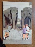 Indische Olifanten In De Zoo Van Antwerpen --> Beschreven - Éléphants