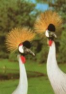 Vogelpark Walsrode - Ostafrikanischer Kronenkranich - Vögel