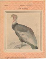Couverture De Cahier - Les Oiseaux, Le Condor - Garnier - Book Covers