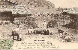 Agriculture. CPA. Elevage. Vers Les Chalets. Les Cochons A La Mangeoire Sous Le Regard Des Enfants (animée) - Elevage