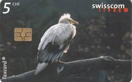 11520 - TAXCARD - REGNO DEGLI UCCELLI-CAPOVACCAIO-USATA - Suisse