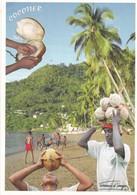 Mayotte. Le Cocotier Nourricier. - Mayotte