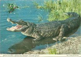 Ansichtskarte Tansania / Tanzania Krokodil / Crocodile Color 1975 Mafinga #2383 - Tanzania