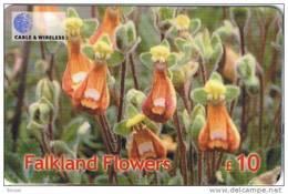Falkland Islands, £10, Lady's Slipper, Flower, Mint Only 12.000 Issued, 2 Scans - Falkland Islands