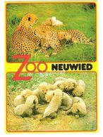 Germany - Neuwied - Zoo - Tierpark - Leopard - Lions