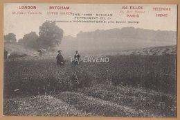 London MITCHAM Virgin Peppermint Oil Woodmansterne Plantation EPSOM  RP  L553 - Londres – Suburbios