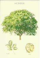 Carte Illustrée Arbre, Noyer, Feuille, Fruit, Noix - Dessin Jacky Jousson - Bäume