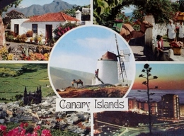 Espagne > Islas Canarias>  CANARY ISLAND CANARIES - Espagne