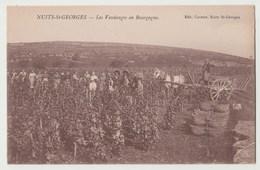 CPA 21 NUITS ST GEORGES Les Vendanges En Bourgogne - Nuits Saint Georges