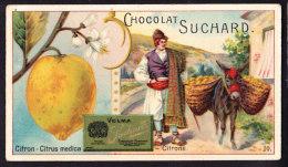 CHROMO Chocolat SUCHARD Fruits Et Plantes Citron   Citrus    Serie 140 - Suchard