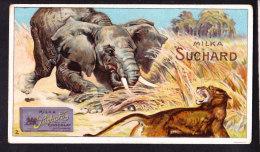 CHROMO Chocolat SUCHARD Animaux  Elephant   Animals     Serie 142 - Suchard