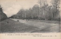 77 - FONTAINEBLEAU - Chasse à Courre En Forêt De Fontainebleau - Chiens à La Voie Traversant Une Route - Fontainebleau