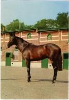 HORSE  Cavallo Baio E Scuderie - Cavalli