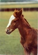 HORSE  Cavallo  Puledro - Cavalli