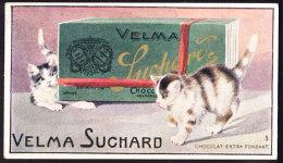 CHROMO Chocolat SUCHARD  Animaux Chats Jouant Cats  Kitty Kitten Serie 159 - Suchard