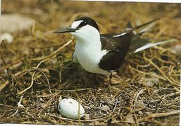 SEYCHELLES PC BIRD Sent To Switzerland 1 Stamps PC USED - Seychelles