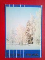 Winter Scene - Finland