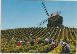 51  Moulin Historique Du Verzenais  Propriete Du Champagne Heidsieck - Autres Communes