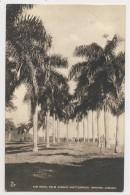 AI17 The Royal Palm Avenue, Shettlewood, Hanover, Jamaica - Jamaica