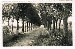 St Idesbald, Une Des Belles Promenades (pk41597) - Koksijde