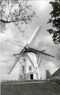SINT-NIKLAAS (O.Vl.) - Molen/moulin - Historische Opname Van De Witte Molen, Hier Nog Met Verdekkerde Wieken In Werking. - Sint-Niklaas
