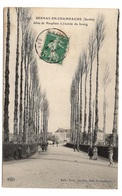 72 SARTHE - BERNAY EN CHAMPAGNE Allée De Peupliers à L'entrée Du Bourg (voir Descriptif) - France