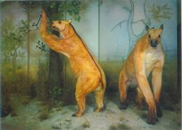 Prähistorische Tiere - Chalicotherium (Rekonstuktion) - Tierwelt & Fauna