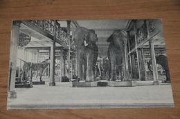 622- Bruxelles / Brussel, Musée Royal D'Histoire Naturelle - Musea