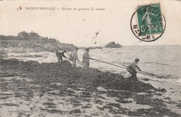 MONTFARVILLE ( Récolte Du Goémon Ou Varech) - France