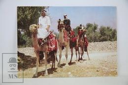 Vintage Asia Postcard - Kingdom Of Jordan - Camel Caravan - Jordania