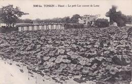 TONKIN / HANOI / LE PETIT LAC COUVERT DE LOTUS - Viêt-Nam