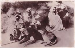 AFRIQUE DU NORD / 1935 / REUNION SYMPATHIQUE / LION DE L ATLAS - Morocco