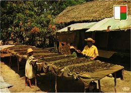 MADAGASCAR - Séchage De La Vanille - Rare - Carte écrite Au Verso - Madagascar