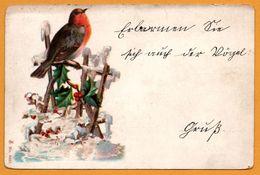 Litho - Rouge Gorge - Oiseau - Neige - Houx - 1901 - Birds