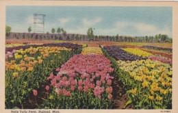 Michigan Holland Nelis Tulip Farm 1966 Curteich - Other