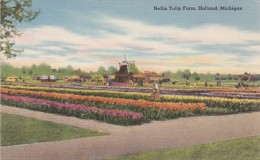 Michigan Holland Nelis Tulip Farm - Other