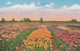 Michigan Holland Nelis Tulip Farm 1941 - Other