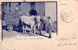 FIRENZE-SPEDALUZZO-BOVI CHE TRASPORTANO DEL GRANO-CARTOLINA VIAGGIATA IL 1-6-1901 - Firenze (Florence)