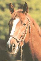HORSES / PFERDE / CHEVAUX /  POSTCARD UNUSED SIZE XL   ( H  4595 ) - Pferde