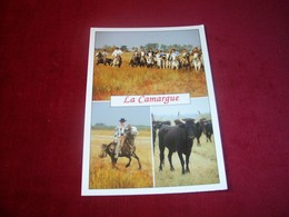 THEME ° LES CHEVAUX / CHEVAL°  CHEVAUX DE CAMARGUE - Horses