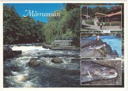Mörrumsan: Laxens Hus, Lax & Lax 23,54 Kg. - Salmon/Lachse/Zalm/Saumon - (Sweden) - Zweden