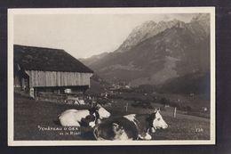 CPA SUISSE - CHÂTEAU D'OEX Château D'Oex Et Le RÜBLI - TB PLAN De 2 Vaches + TB Châlet Derrière - VD Vaud