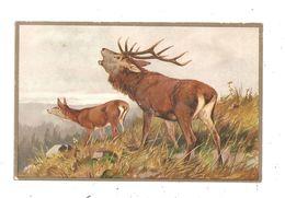 Scène De Chasse- Cerfs -  --(C.3040) - Hunting