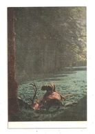 Scène De Chasse- Cerfs-chiens Teckel -  --(C.3041) - Hunting