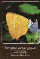 Nierenfleck, Birkenzipfelfalter (Thecla Betulae) - Schmetterlinge